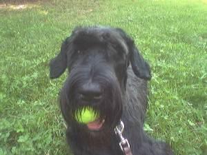 guai a chi mi tocca la palla...